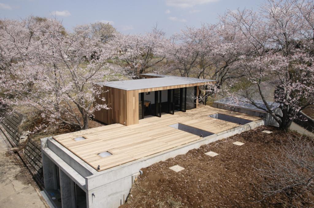 桜の下で眠る家